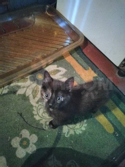 Когда кошка будет ловить мышей? - запись пользователя наталья (sila_81) в сообществе домашние животные в категории помогите советом - babyblog.ru