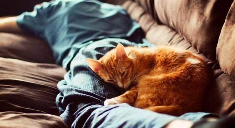 Кошка не ложится на больное место. почему кошка на больное место человека ложится