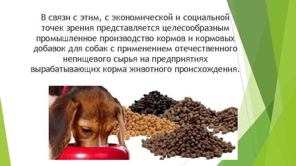 Можно ли есть кошачий корм человеку, если он жидкий или сухой