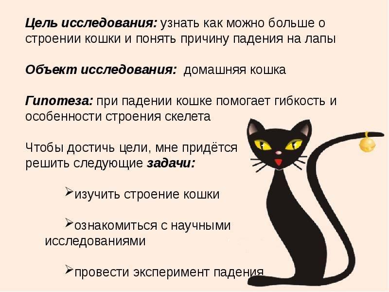 Почему кошки приземляются только на лапы. почему кошка падает на лапы так можно описать технику разворота кошки при падении с высоты