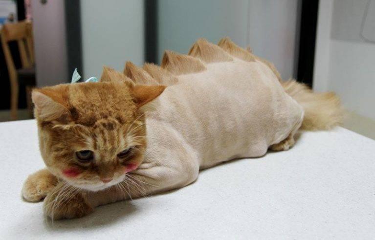 Как успокоить кота чтобы подстричь шерсть. советы