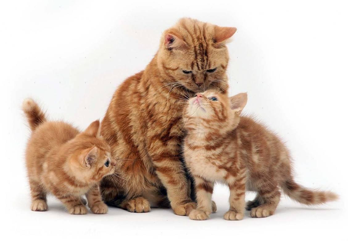 Есть ли у кошек память? - catdogpet