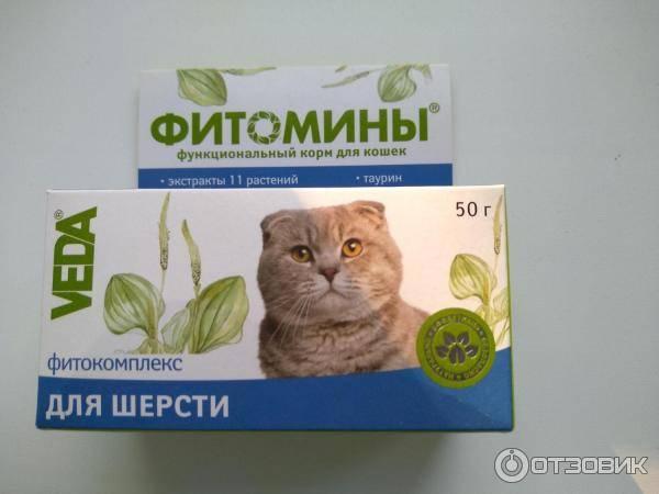 Витамины от выпадения шерсти у котов: лучшие средства для улучшения состояния, что провоцирует линьку