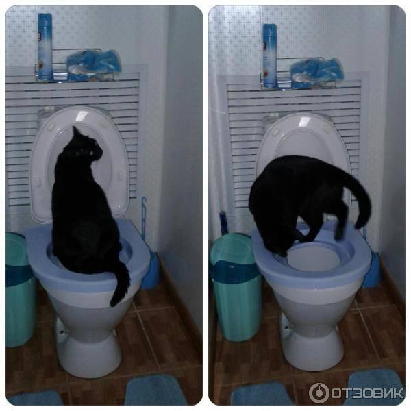 Как кота в домашних условиях приучить к унитазу: набор для унитаза