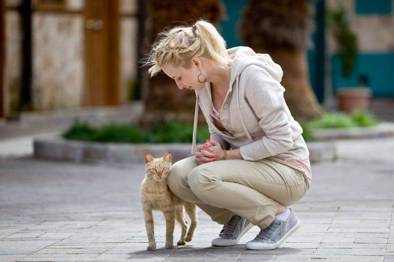 Что делать если потерялась кошка