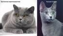 Как определить породу кота: характерные признаки
