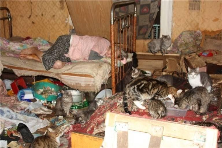 Как выглядит умирающая кошка и причины смерти животноговетлечебница рос-вет