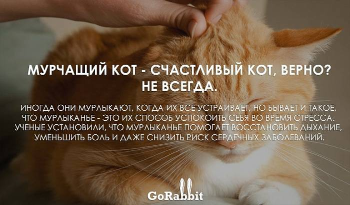 Кошка издает необычный звуки не мяукает и не мурчит что то среднее