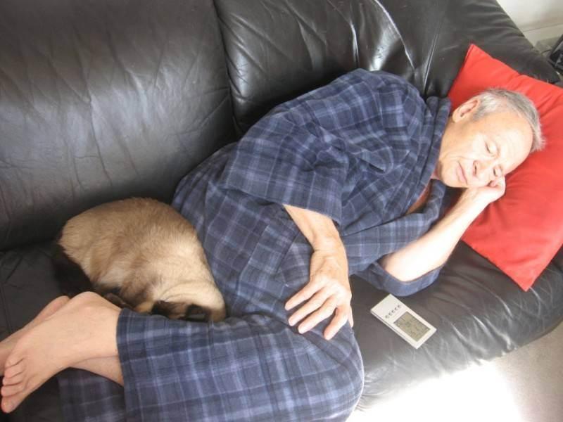 Почему кошки спят с хозяевами: причины такого поведения почему кошки спят с хозяевами: причины такого поведения