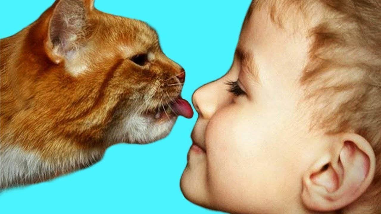 Почему кошка лижет руки: 6 причин поведения питомца