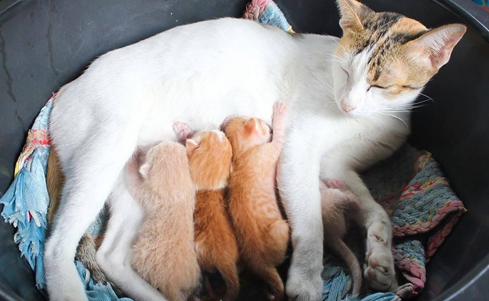 Как и чем кормить котят в 2 недели: режим и нормы кормления, промышленные смеси, заменители молока, витамины и добавки