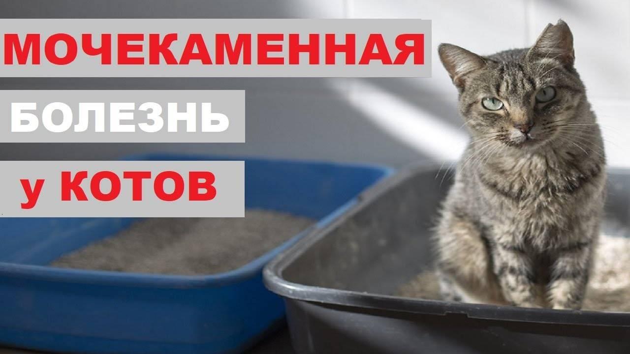 11 причин почему кот писает кровью — лечение и диагностика