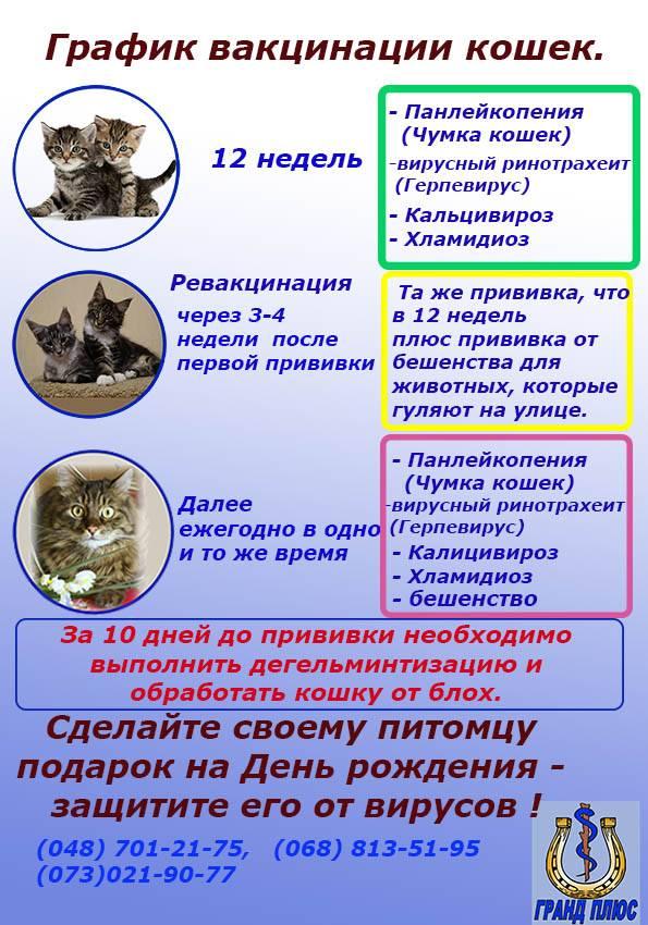 Обязательные прививки котятам: какие вакцины и в каком возрасте питомца нужно делать вакцинацию