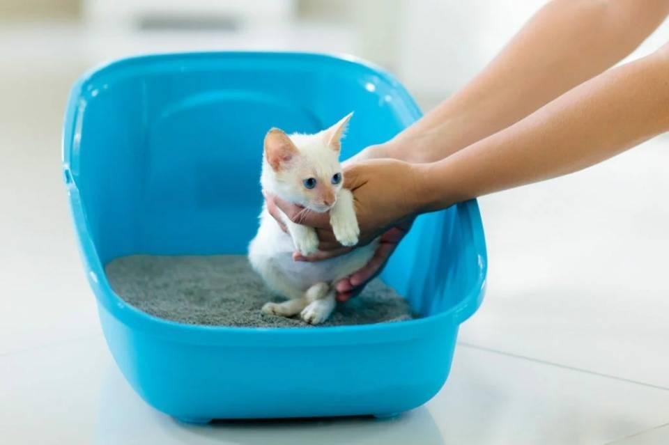 Кот мяукает когда ходит в туалет по маленькому - кошки и собаки