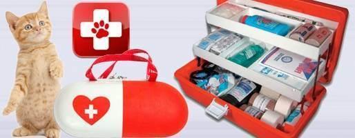 Лекарства в доме: собираем аптечку для первой помощи кошке