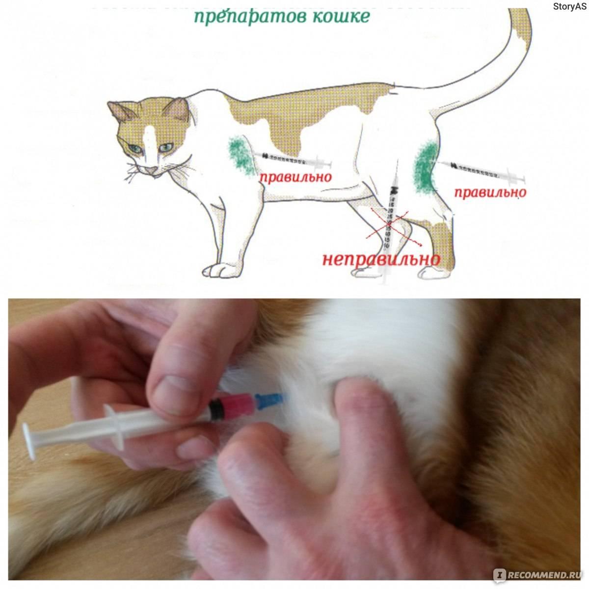 Прививки кошкам. правильная вакцинация котят