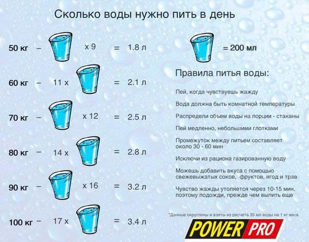 Сколько воды должна пить собака в сутки: норма и отклонения