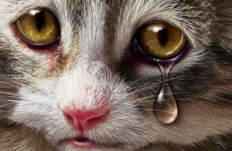 Почему у кошки после еды слезятся глаза
