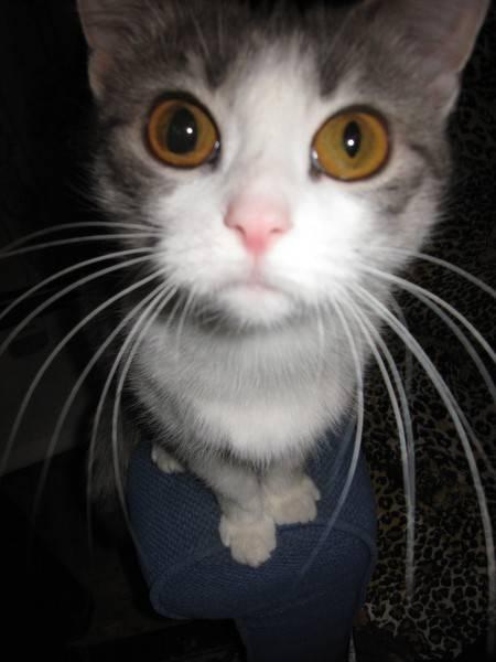 У кошки зрачки разного размера.