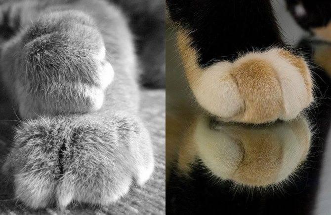 У кошки задние лапы плохо ходят: причины и лечение