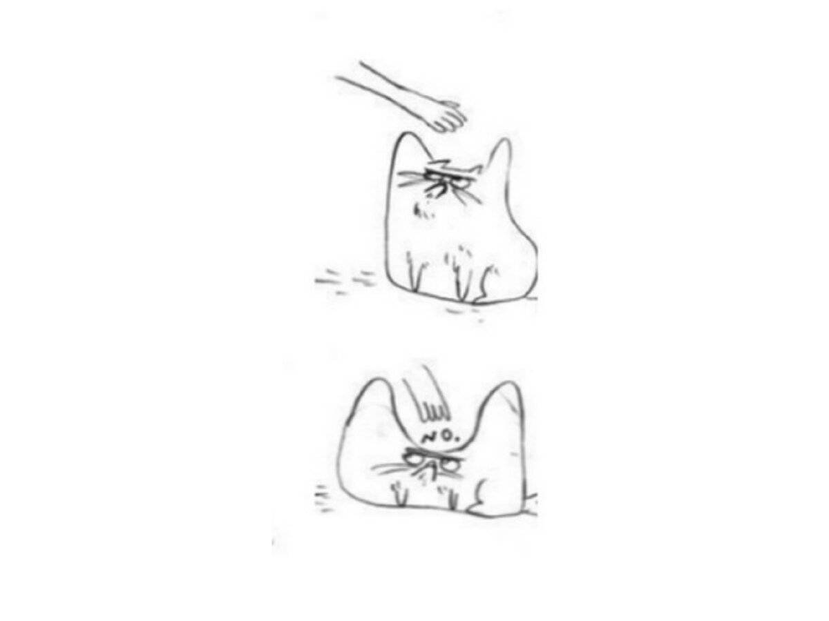 Почему кошки и коты мурлыкают и урчат?