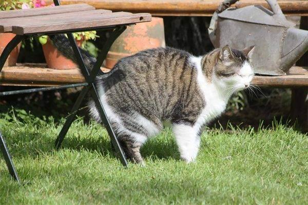 Почему кошка дрожит всем телом, кот трясется как будто замерз