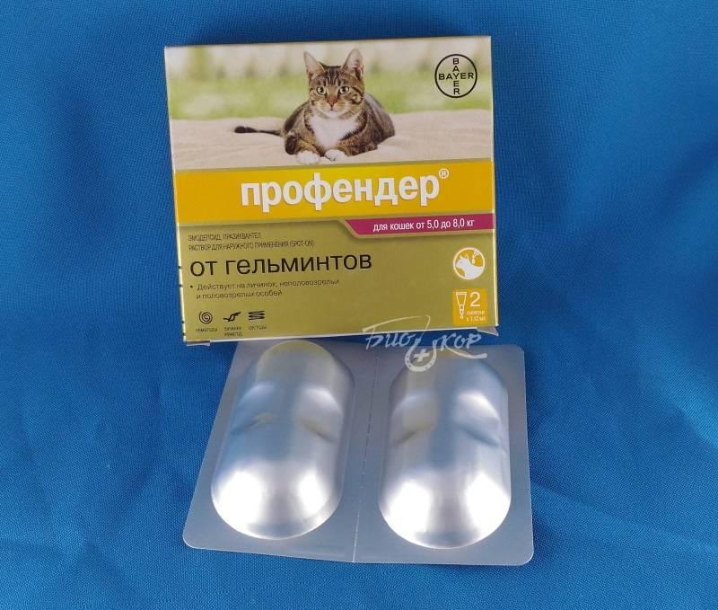 Профендер для кошек: инструкция по применению, противопоказания и побочные эффекты, аналоги, отзывы