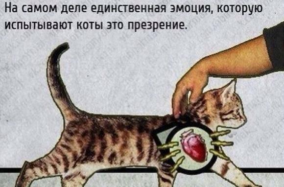 Загадки кошачьего мурлыканья, или что нам расскажет биоакустика?