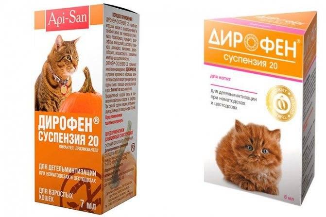 Таблетки от глистов для кошек : инструкция по применению | компетентно о здоровье на ilive