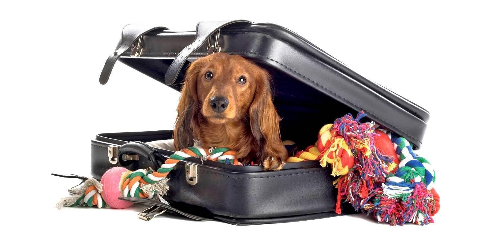 Что нужно учесть при вывозе домашних животных за рубеж