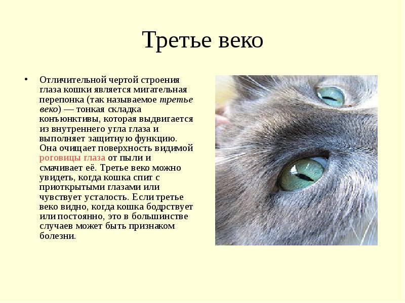 У кота разные зрачки по величине: у кошки один зрачок узкий другой широкий