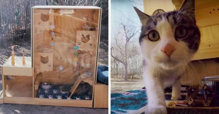 Кто умнее — кошки или собаки? - hi-news.ru