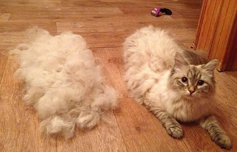 Фурминаторы для кошек (44 фото): что это такое и как пользоваться? преимущества перед пуходеркой и расческой, отзывы владельцев