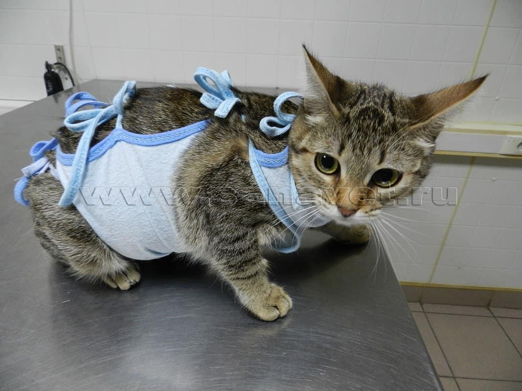 Осложнения после стерилизации у кошек: советы ветеринара