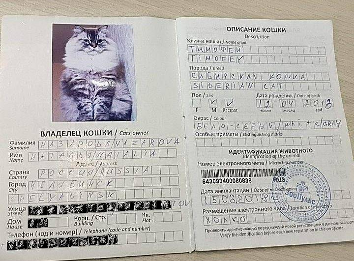 Как перевозить кошку в поезде или самолете по России и за границу: правила перевозки