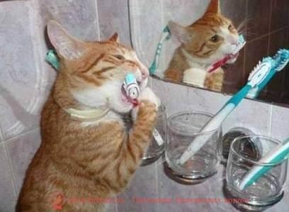 Зубной камень у кошек удаление в домашних условиях: профилактика и чистка