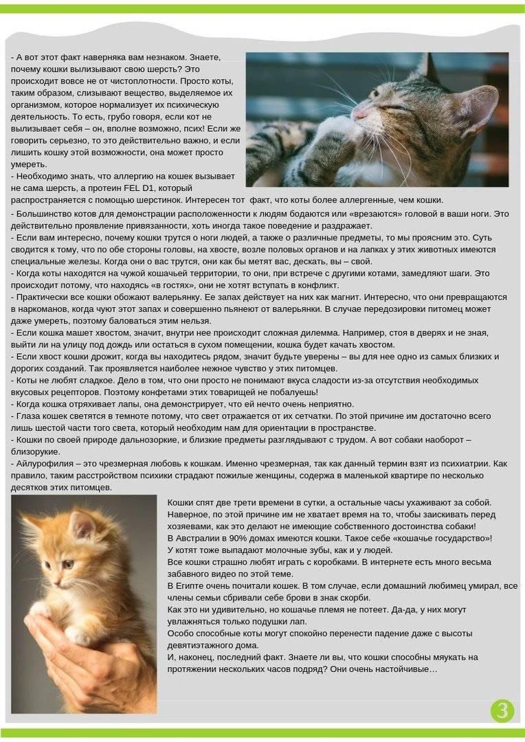 Кот вздрагивает всем телом. кот дрожит — полный список причин от ветеринара