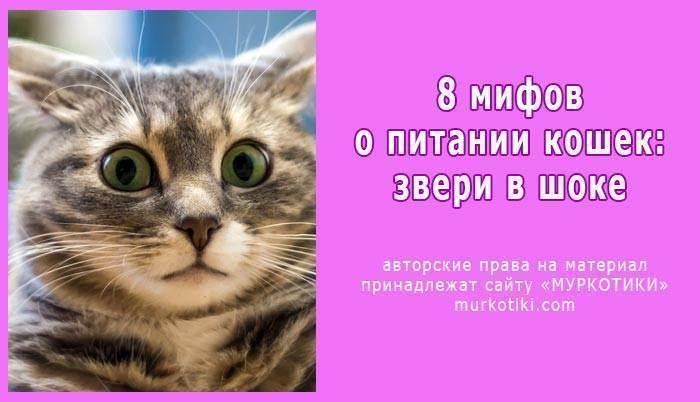 Переводим кота с сухого корма на натуральную пищу: как переучить