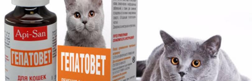 Что поможет восполнить полезными веществами организм животного – гепатовет на страже кошачьего здоровья