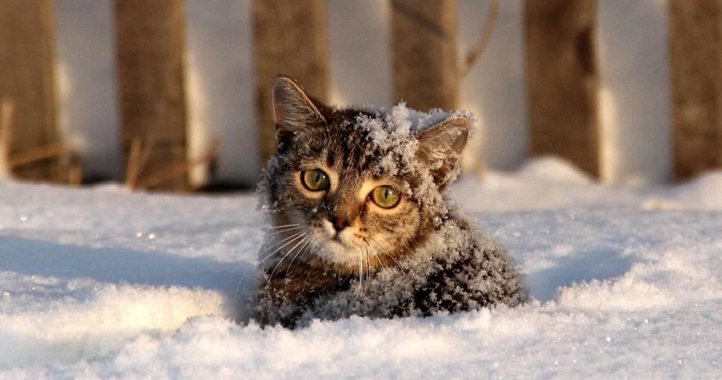 Как понять, что моей кошке холодно? - love ferplast