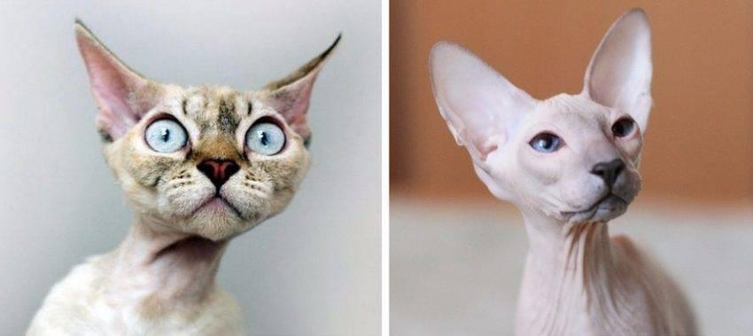 Почему у кота выпадают усы: что делать хозяину - oozoo.ru
