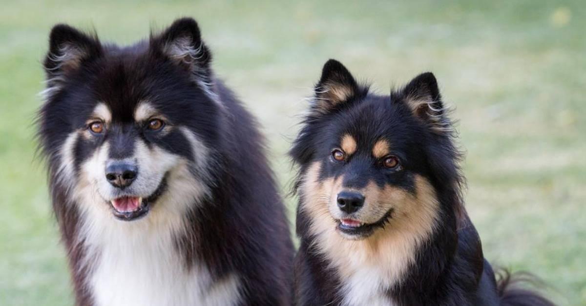 Лайки: все, что нужно знать о собаках