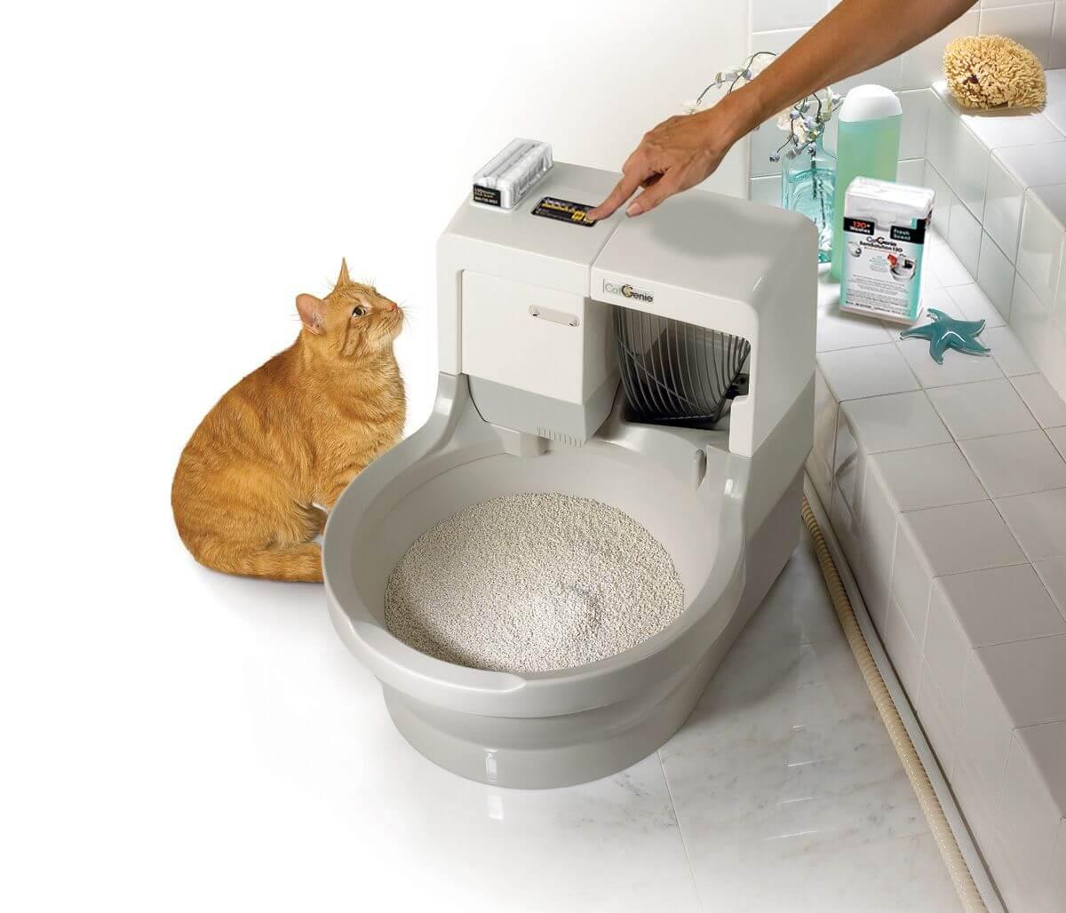 Лоток для мейн-куна — выбор закрытого туалета-домика и наполнителя