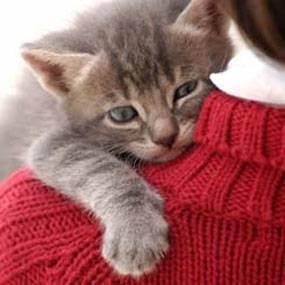 Кастрация кота: вопросы