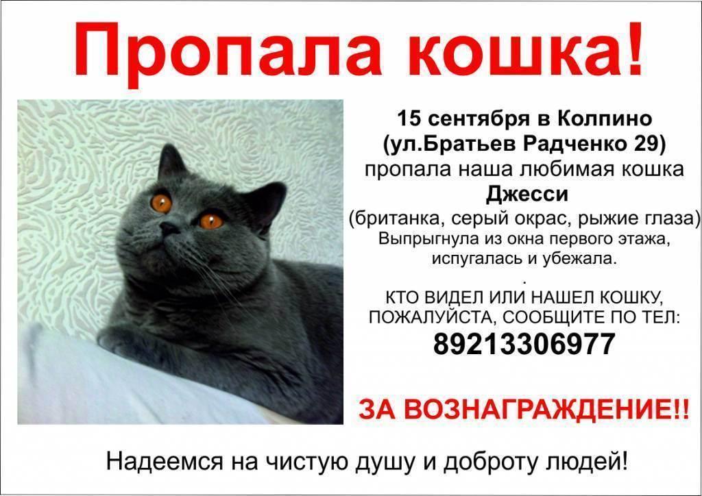 Как найти пропавшую кошку - wikihow