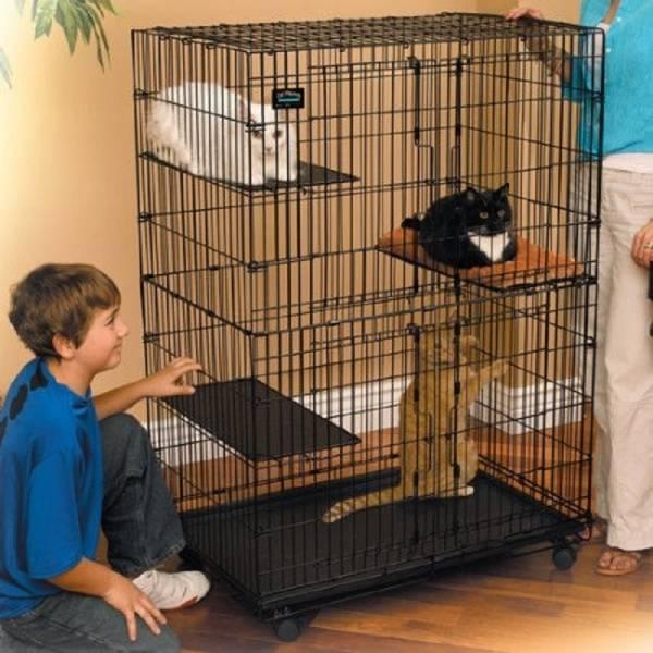 Вольер для кошек: назначение, виды и изготовление