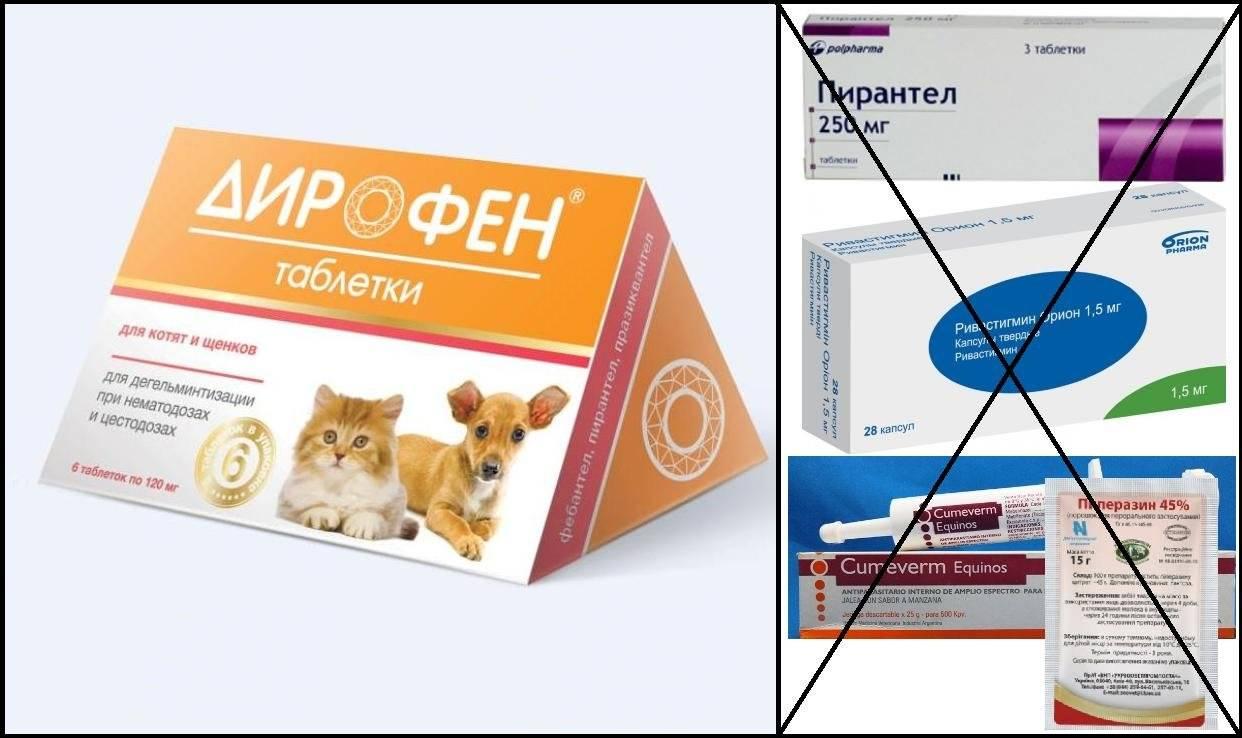 Суспензия от глистов для кошек: как и какой препарат давать питомцу