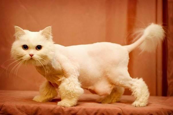 Почему после стрижки кошка странно себя ведет и не может лечь, в чем причина стресса?
