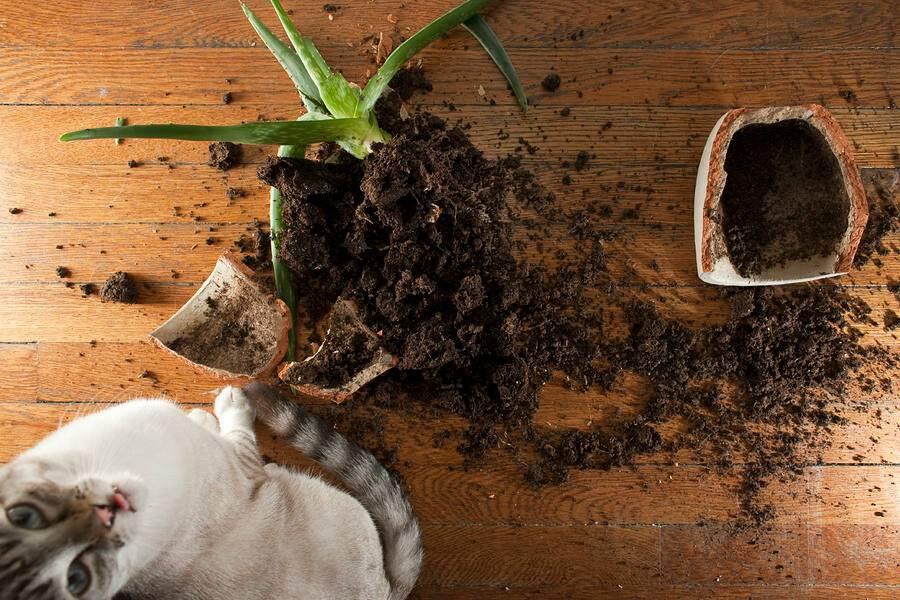Зачем кошка ест песок: причины и что делать зачем кошка ест песок: причины и что делать