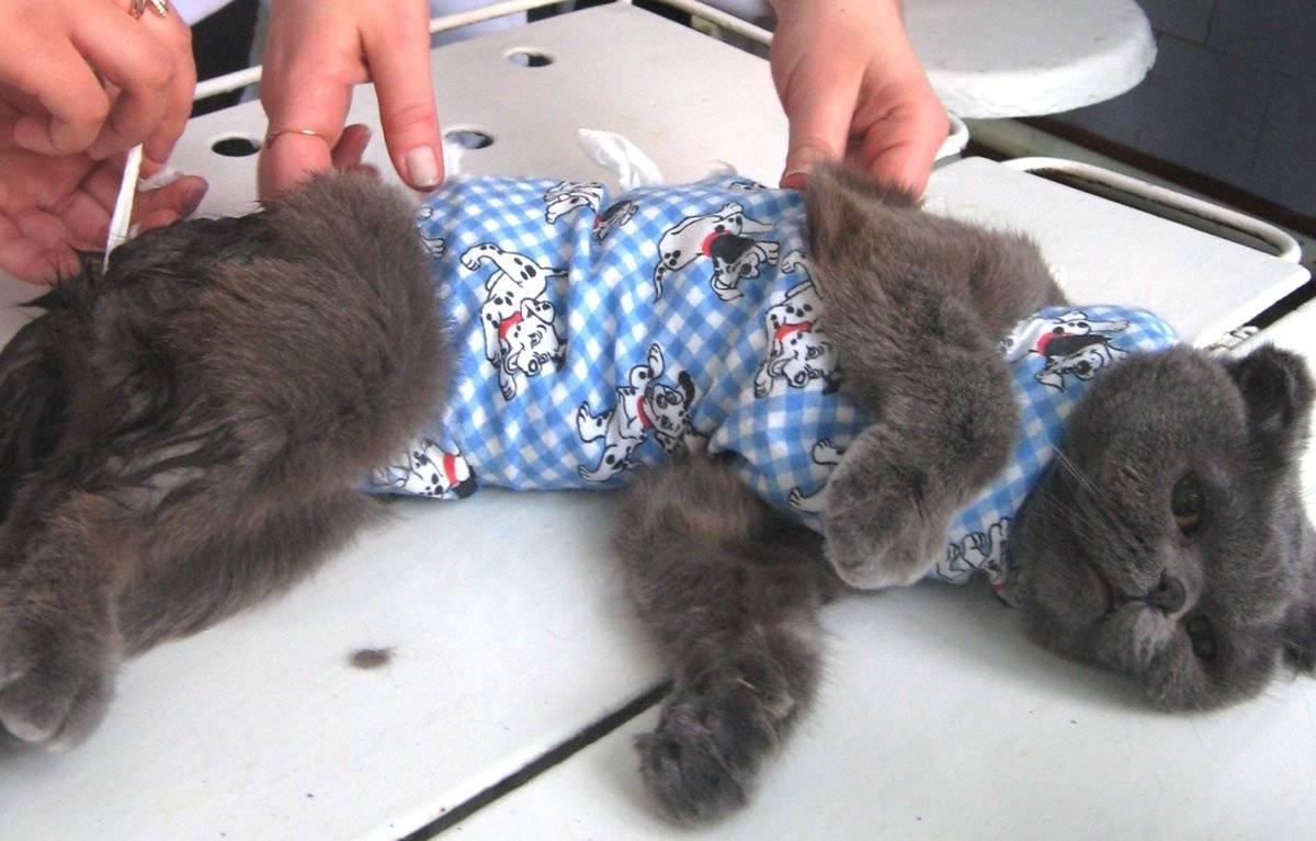 Уход за котом после кастрации: правила, советы, рекомендации
